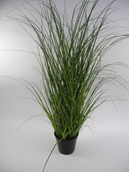 Gras im Topf, Höhe 91cm, 1Stück