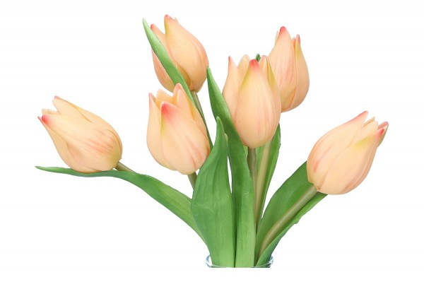 Tulpe 20cm, 1 Pack = 6 Tulpen