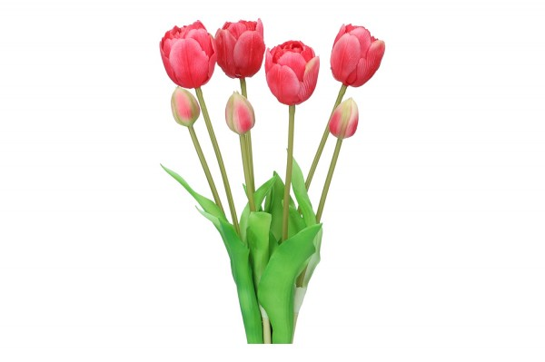 Tulpenbund 43cm, 1 Bund = 7 Tulpen (#195010060)