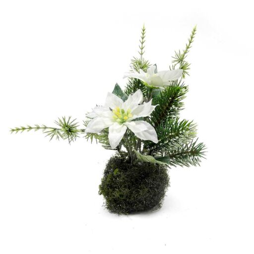 Poinsettia mit Tanne 16,5cm, 1 Stück